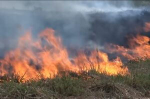 MA teve cerca de 4 mil focos de queimadas a menos em 2020, diz governo
